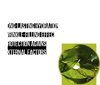 serum-en_08